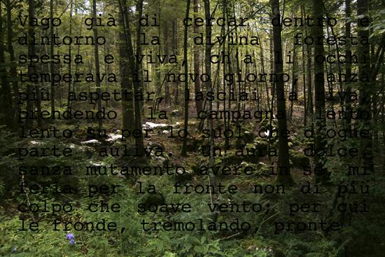 spuglia-nella-selva-antica-03