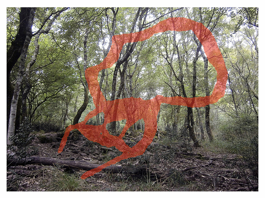 spuglia nella selva antica 01