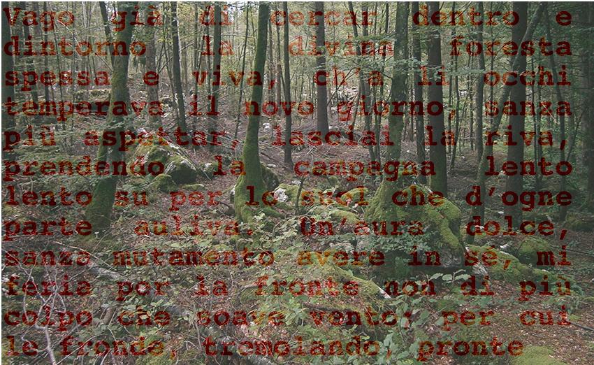 08 Nella selva 04