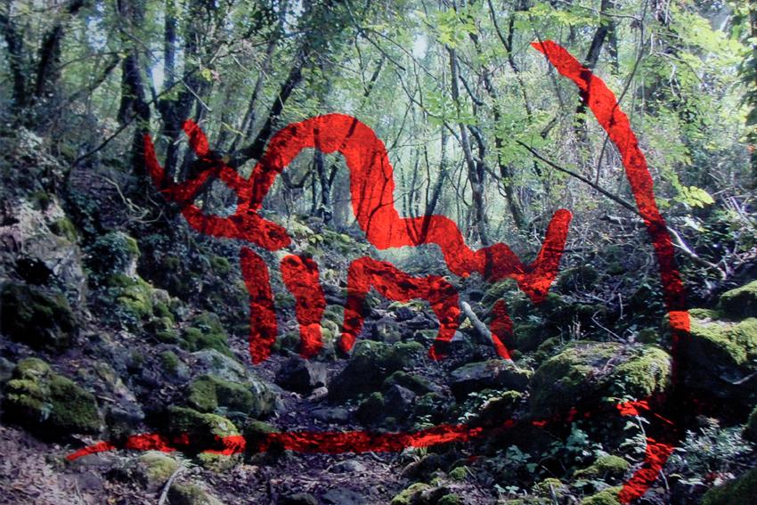 09 Nella selva antica 06
