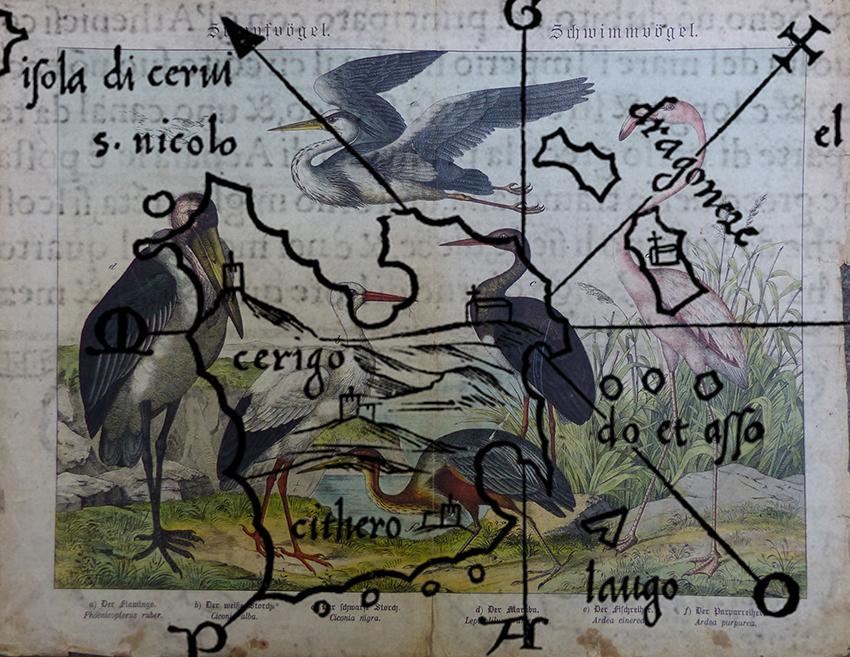 05 Raubvögel Kythira 05